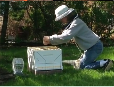 Installing the first bees